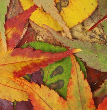 Nature's autumnal display of colour is a seasonal spectacle. Read our tips for decorating with dazzling displays of autumn colour.